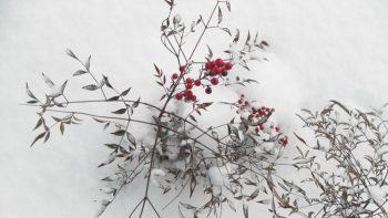Arkabahçe'de Bu Kış Neler Var?